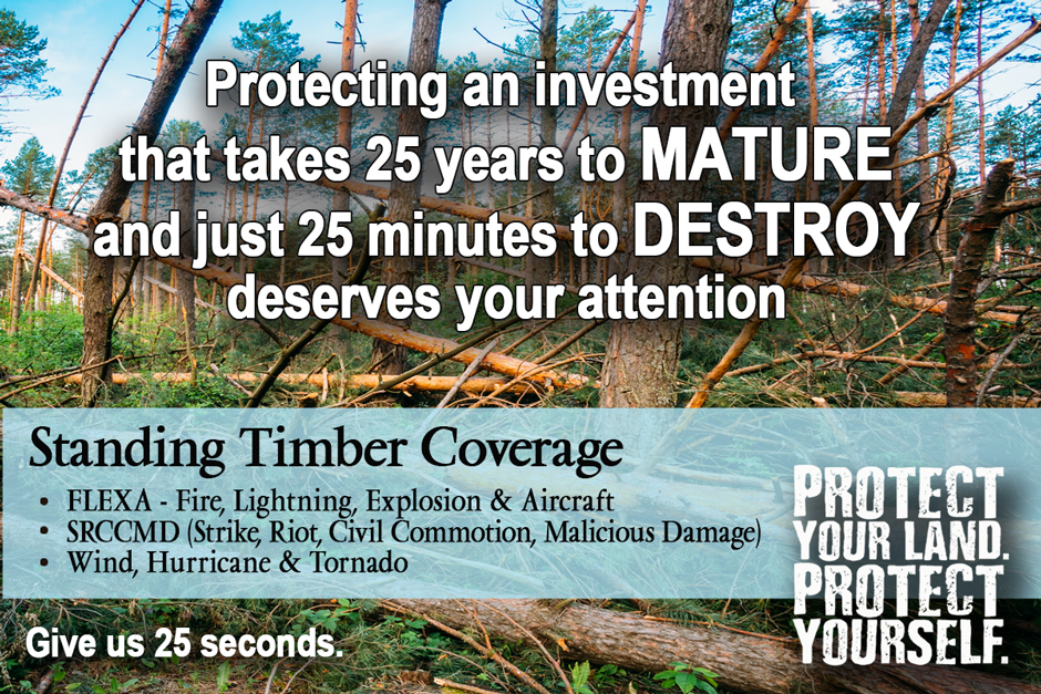 Standing Timber Insurance